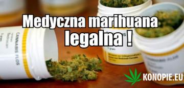medyczna marihuana1