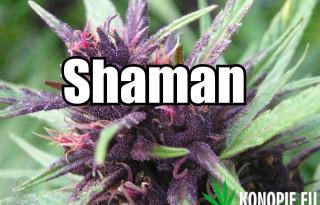 shaman1v