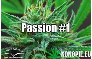 Passion #1vv