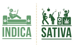 difference-effect-between-indica-sativa