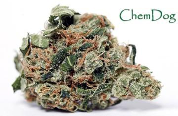 Chem-dog