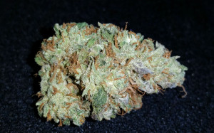 White-Widow-bud1