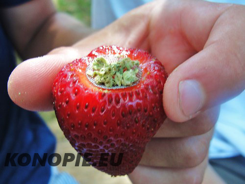 palenie marihuany z truskawki